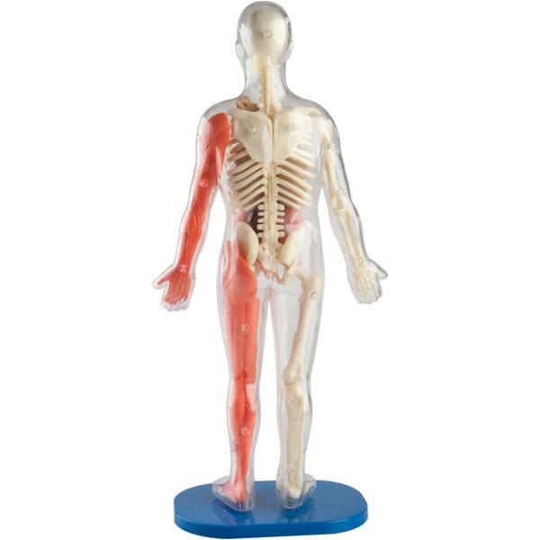Smartlab Squishy Human Body Science Sets Ireland